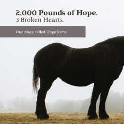 Hope Reins Non Profit Brochure Design
