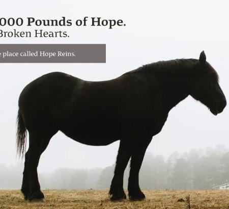 Hope Reins Non Profit Brochure Design